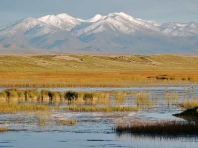 Qinghai Lake wetland